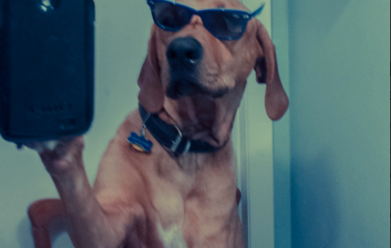 dog_selfie_cropped