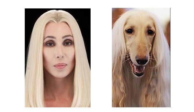 cher looks like dog