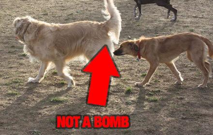 bomb-sniffer