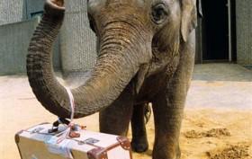 elephant with suitcase