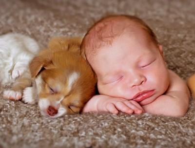 baby-puppy