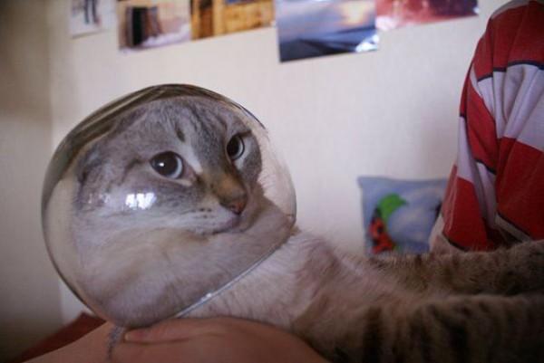 cat-bowl