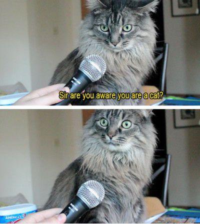sir-cat