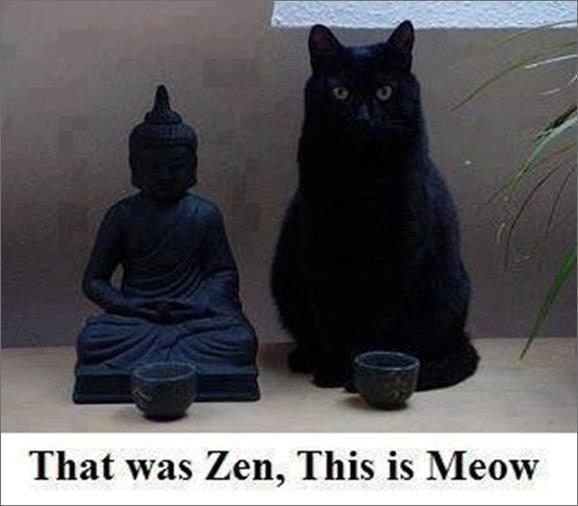 Can I Meditate With A Cat On My Lap