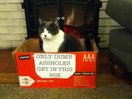 dumb-asshole-cat
