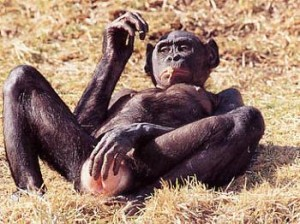 polls_bonobo_female_masturbating1_1942_223488_poll_xlarge